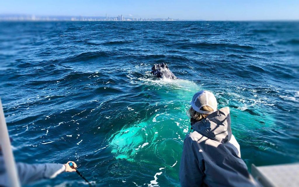 Sea the Gold Coast Whale Watching Season