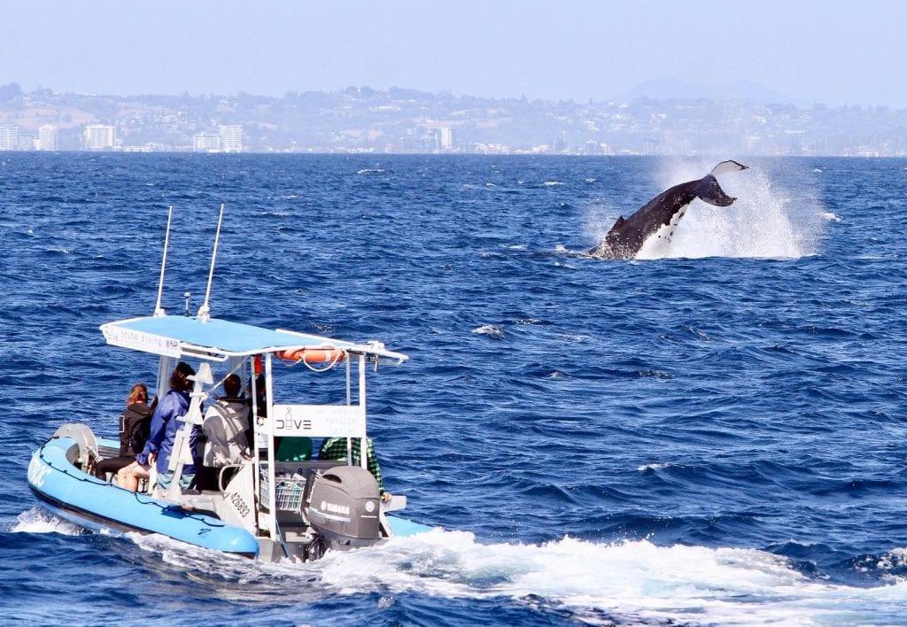 Gold Coast Whale Adventures