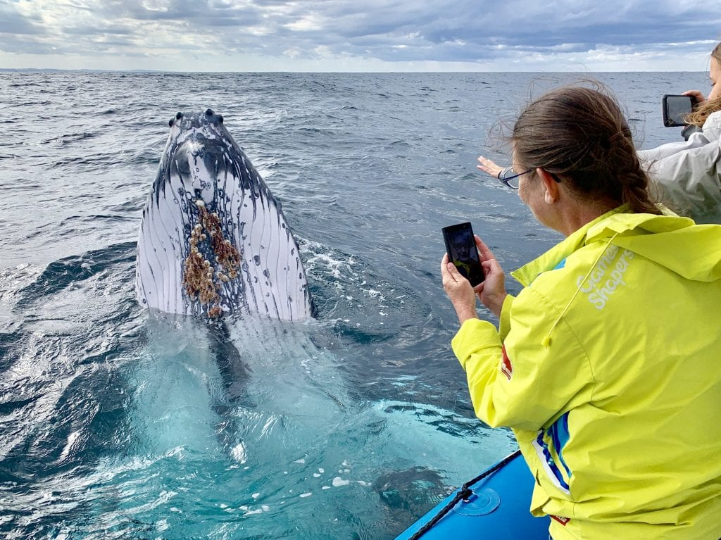 Small Boat Whale Watching Tours