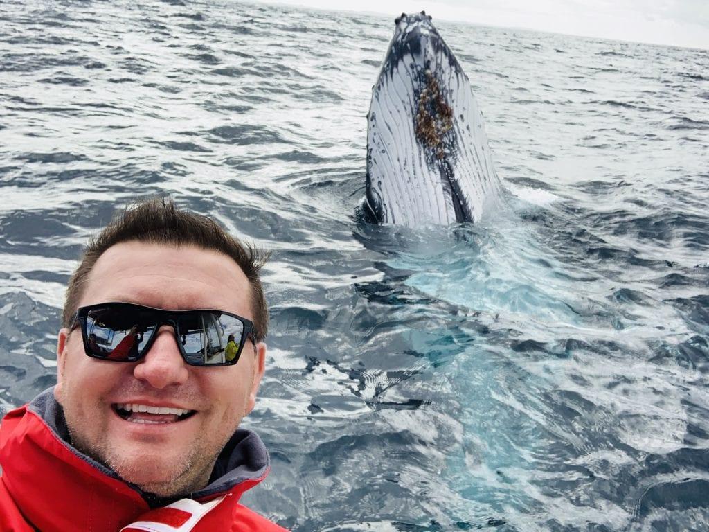 humpback whale selfie
